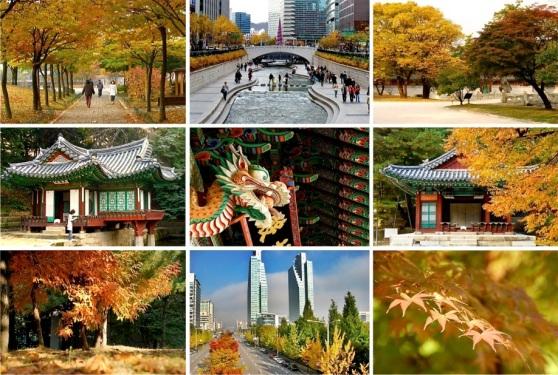 Memoirs of living in Korea